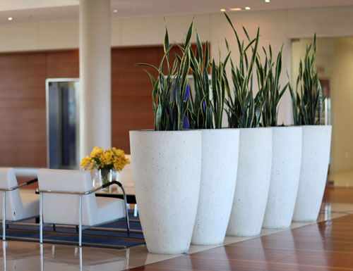 F1200 fibreglass planters in a corporate space